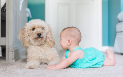 7 Ter-ruff-ic Benefits of Having a Dog in Your Home